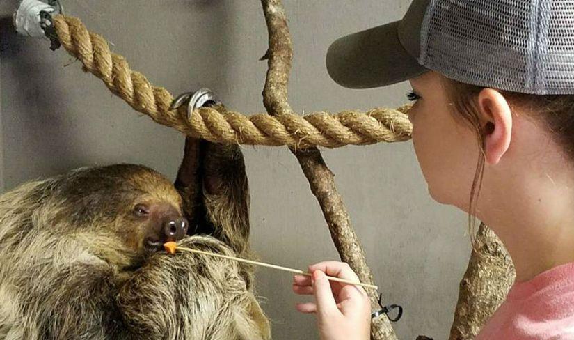 blog sloth