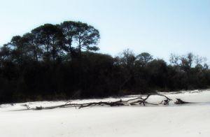 driftwood jekyll 6a