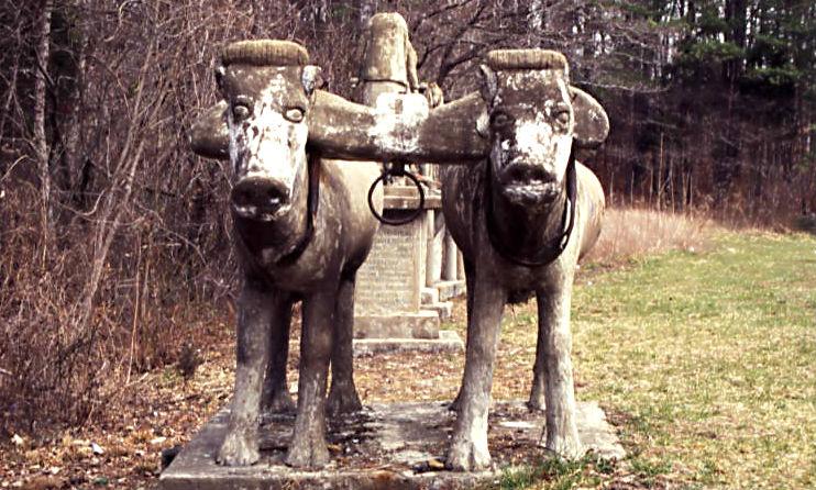 ET_Wickham_roadside_park_and_Wickham_Cemetery_two_yoke_oxen
