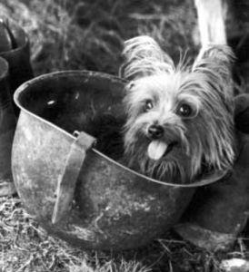 Smoky_(dog)_in_helmet yank wiki